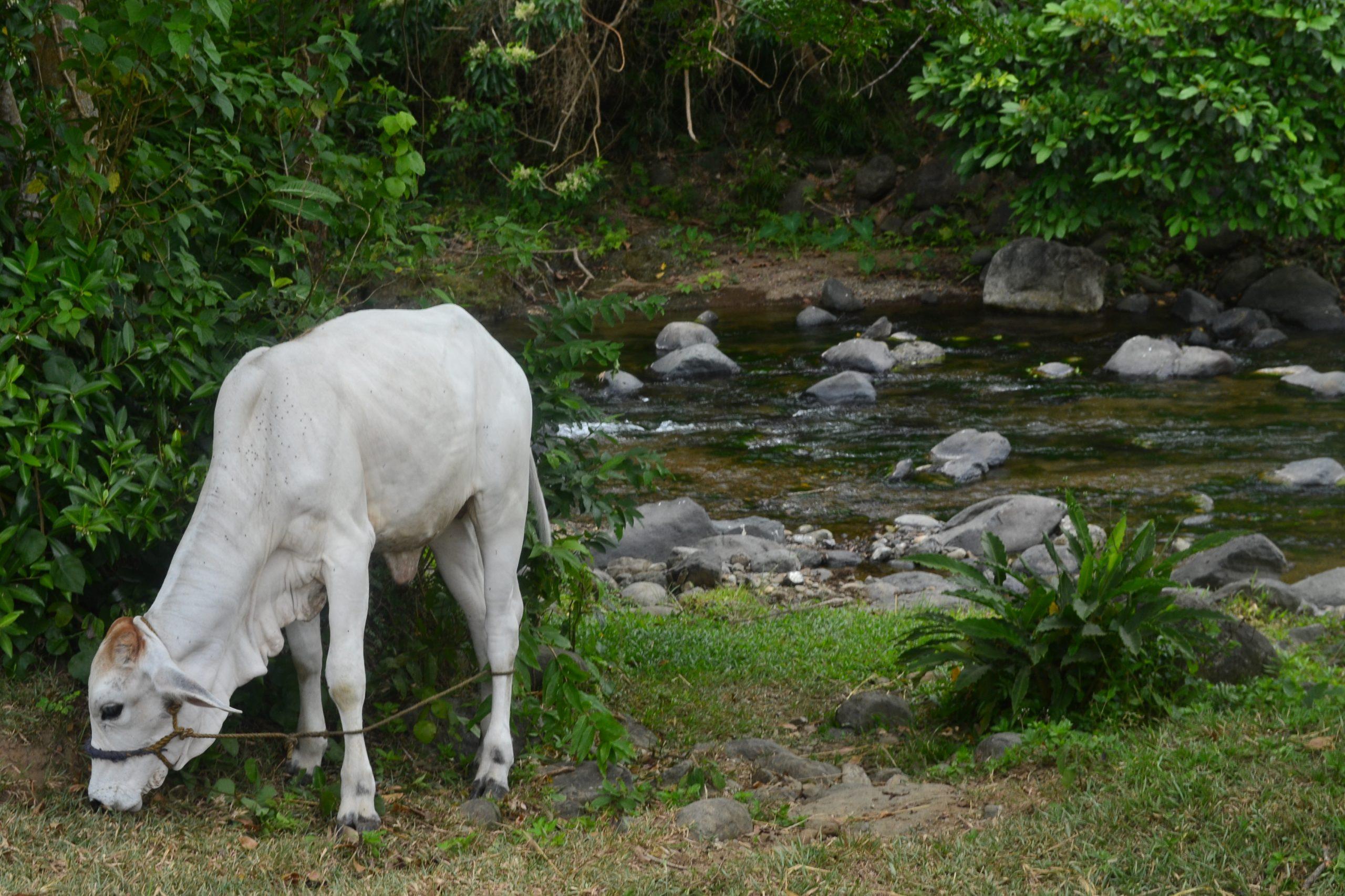 ilocos-norte-kabigan-falls-coffeehan (6)