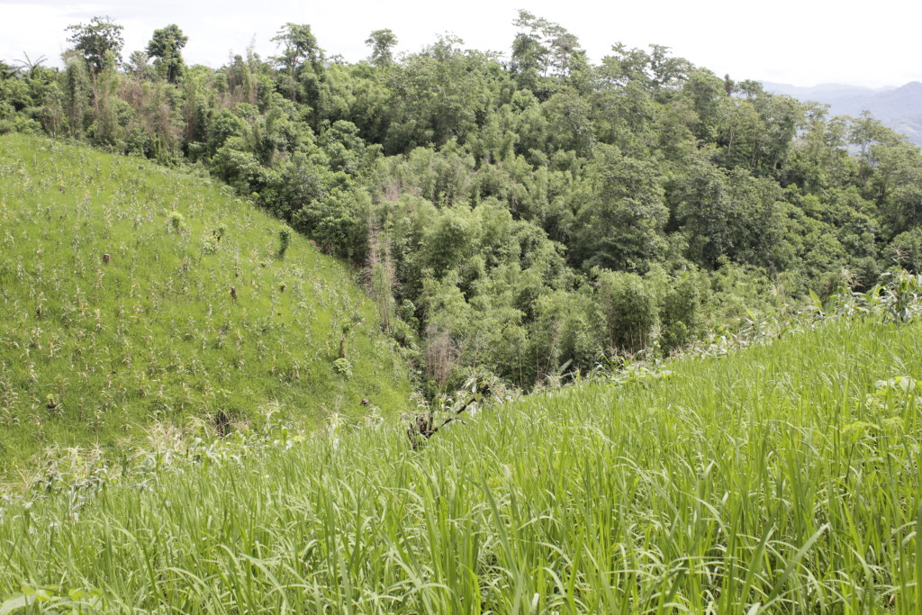 psg-plants-trees-at-ipo-watershed-coffeehan (1)