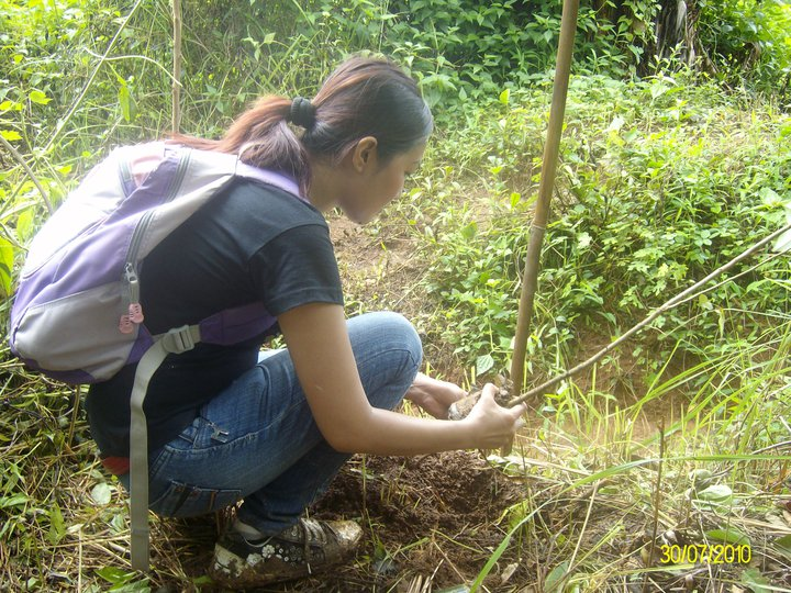 psg-plants-trees-at-ipo-watershed-coffeehan (8)