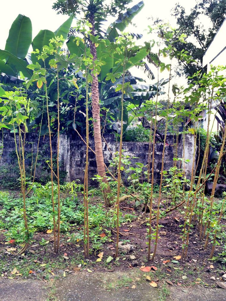 malacañang-park-psg-coffeehan (14)
