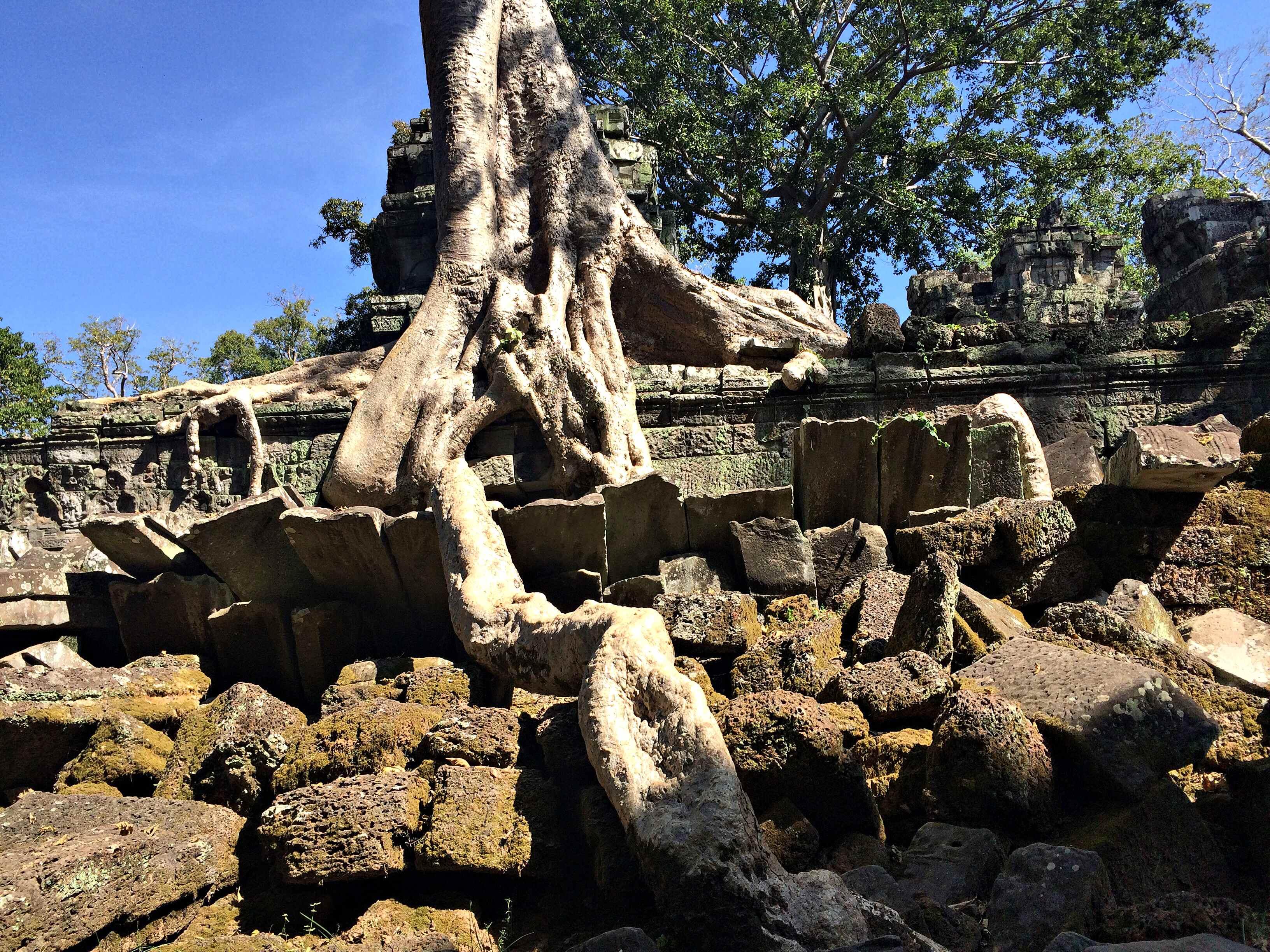 cambodia-ta-prohm-coffeehan (3)