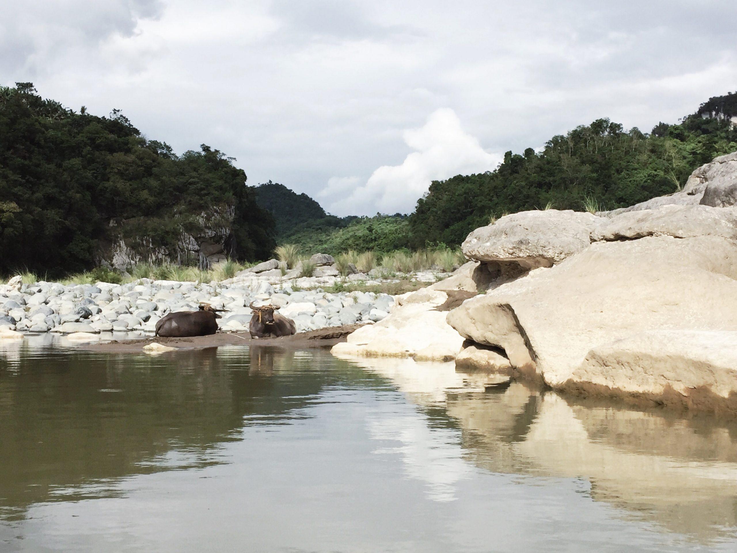 governors-rapids-quirino-coffeehan (9)-min