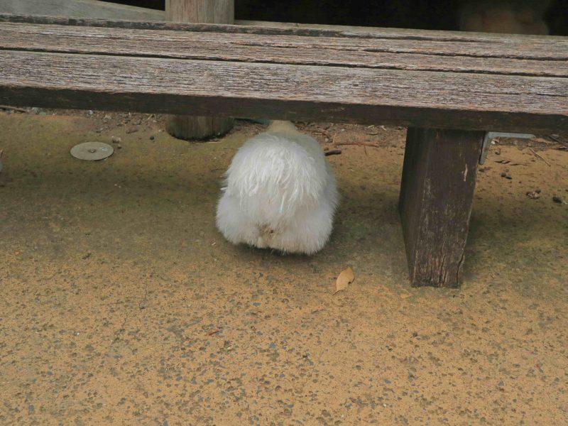 taronga-zoo-animals (4)
