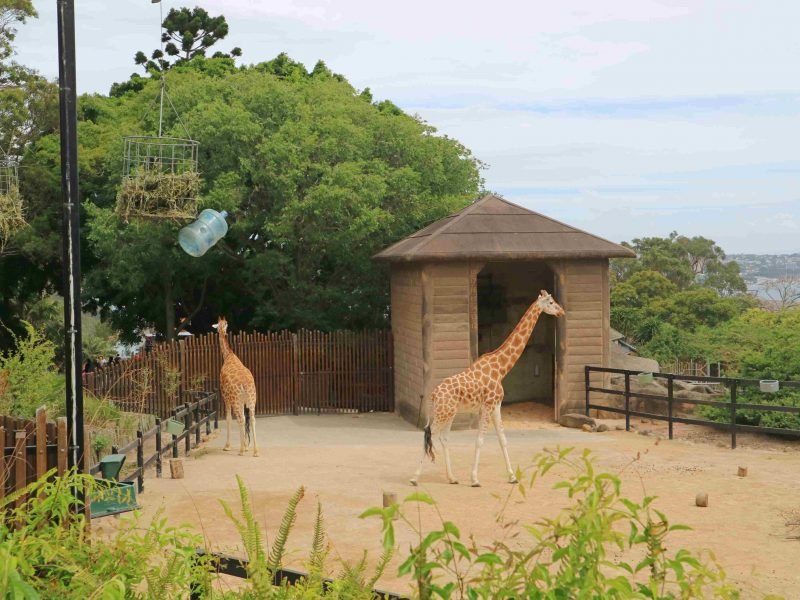 taronga-zoo-animals (6)