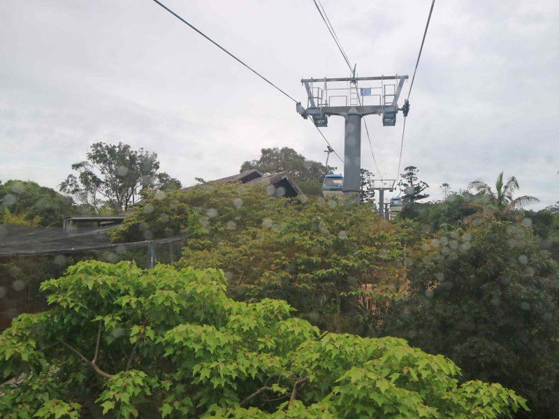 taronga-zoo-cable-car (3)