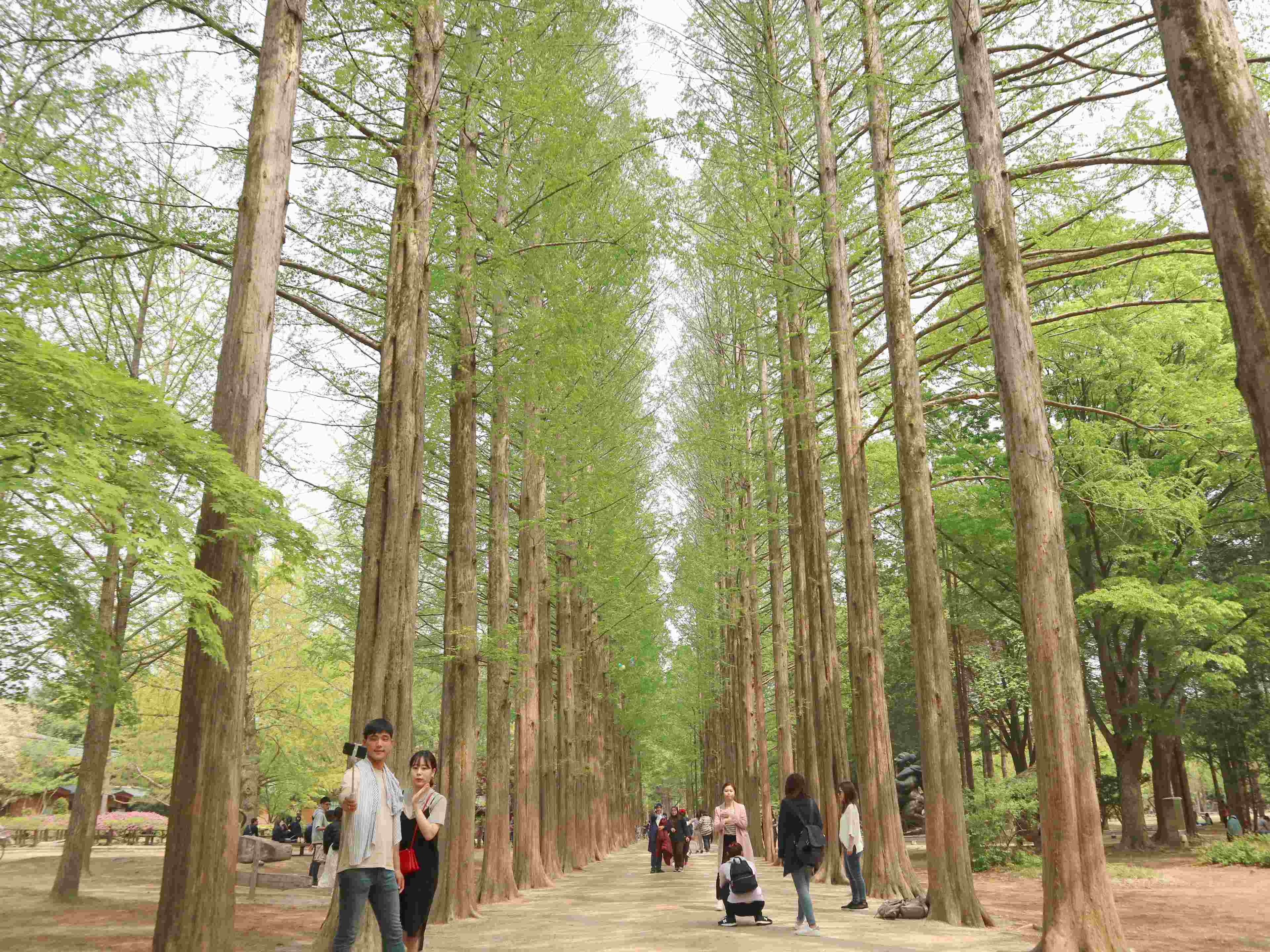 nami-island-south-korea-metasequoia-coffeehan