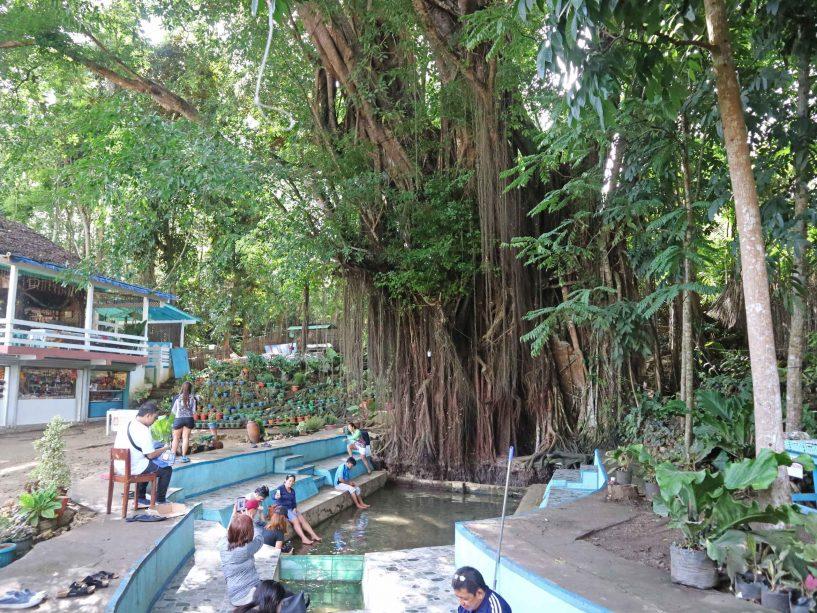 siquijor-balete-tree